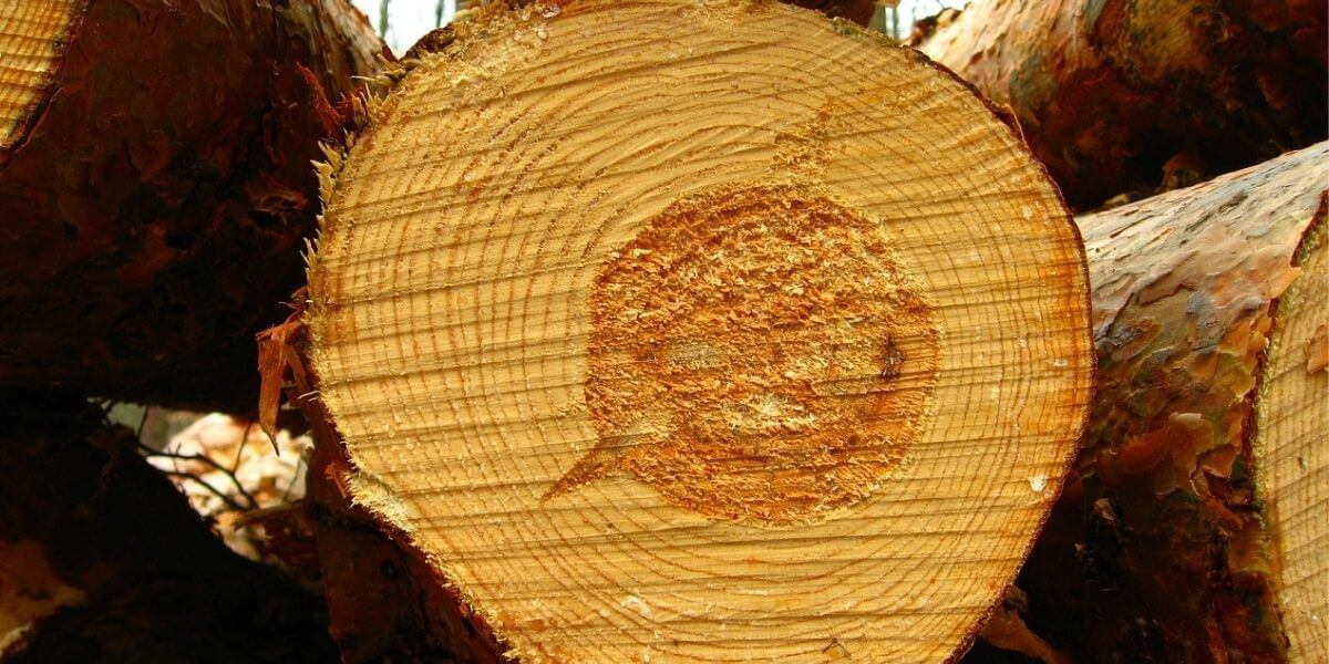 Heartwood vs Sapwood: Its Uses and Woodworking
