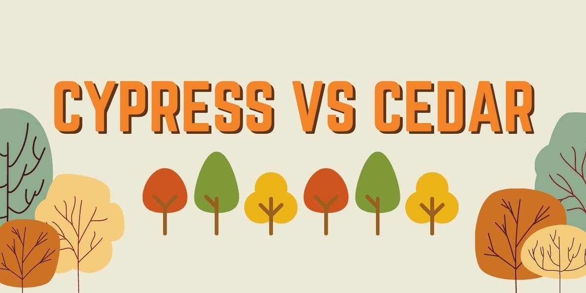 Cypress vs Cedar Wood: Which one is best for you?