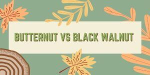 Butternut vs Black Walnut Wood: Which is Best for Your Applications?