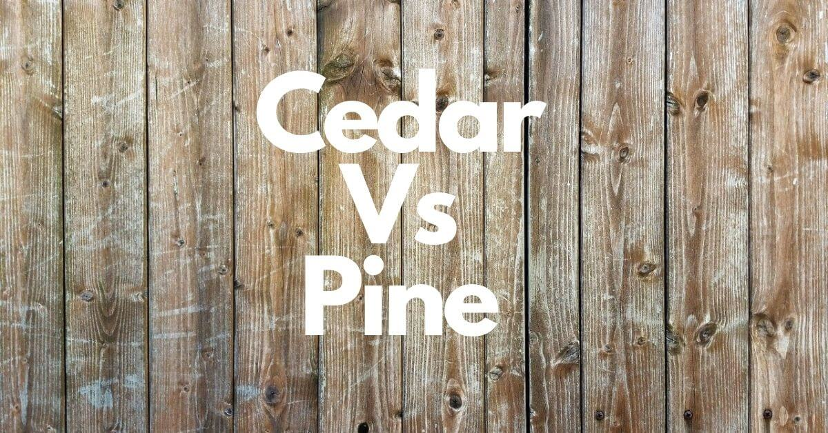 Cedar vs Pine | Difference Between Wood, Tree, and Fence?